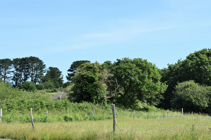 Vente terrain viabilisé 1000 m² Trégastel 22730