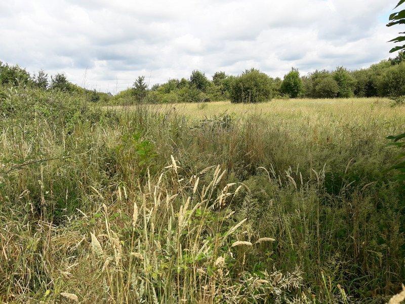 Propriété de 4 hectares avec C.U
