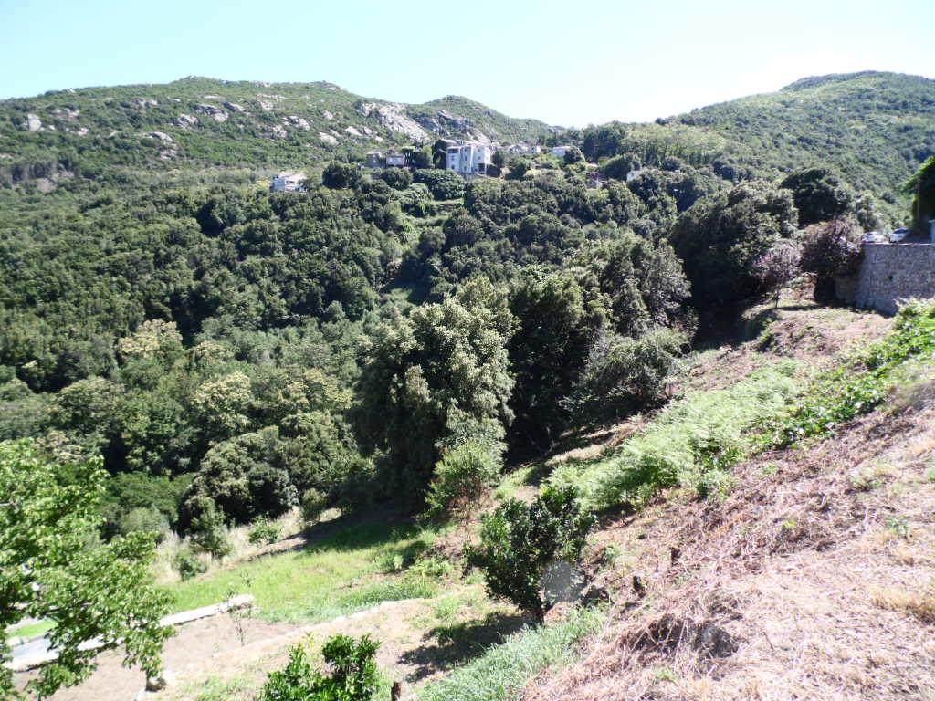 Terrain San Martino Di Lota 2006 m2