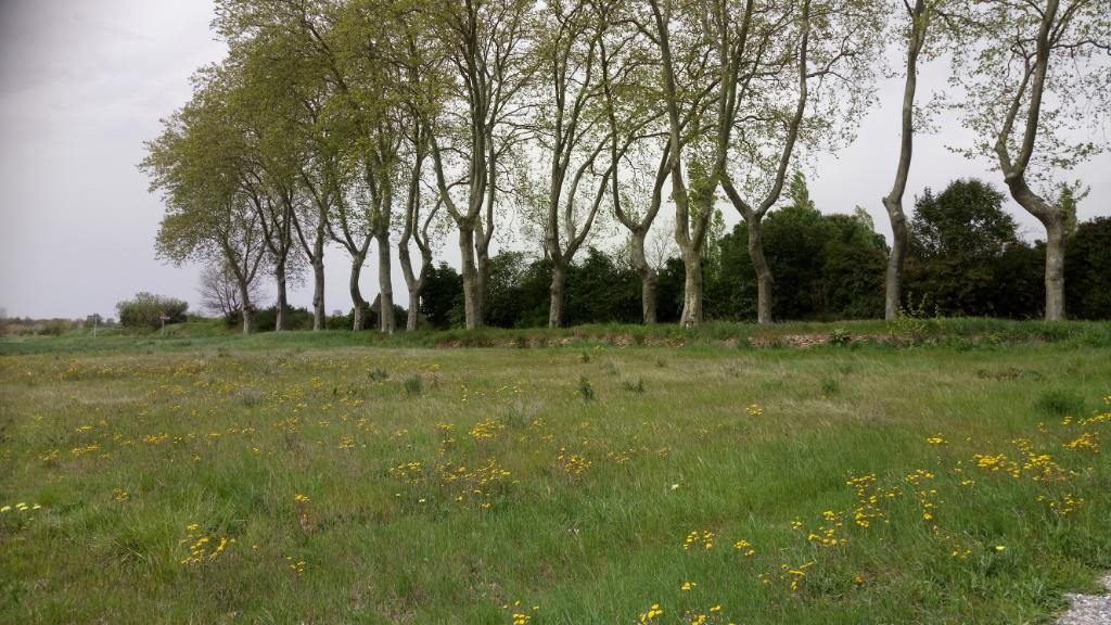 Terrain à bâtir à Villespy 1968 m2