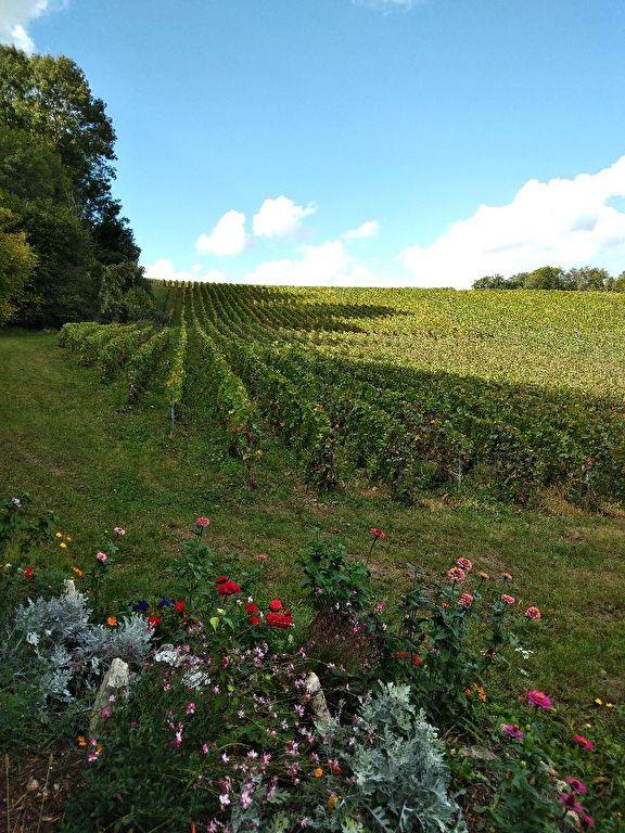 Vignes Vallée de l'Ardre Reims