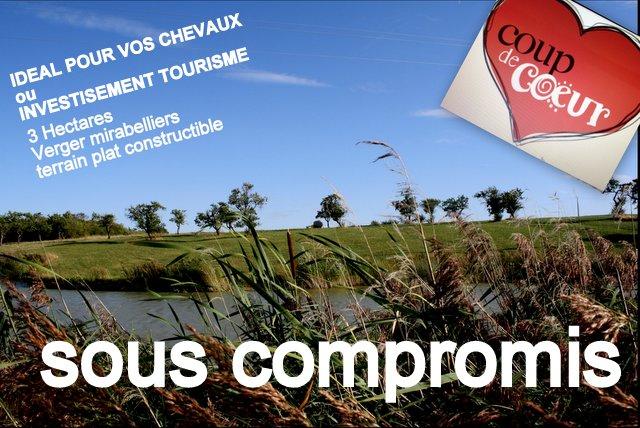 57000 Metz/terrain 3ha avec étang, verger, terrain bâtir,idéal chevaux/123990 HAI