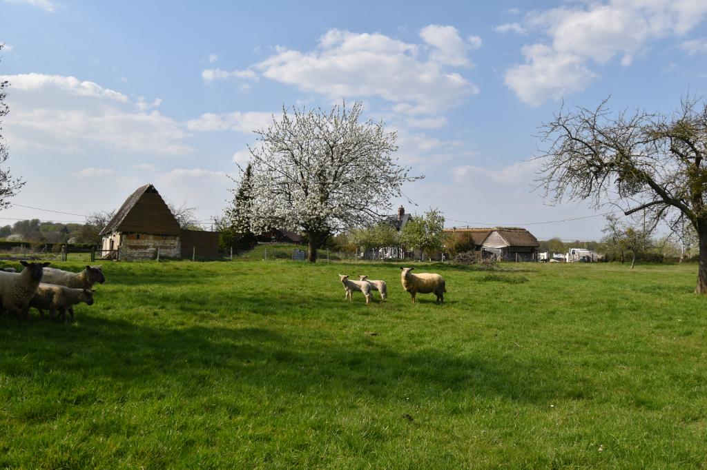Entre Routot et Bourg Achard - Terrain constructible 1200 m2