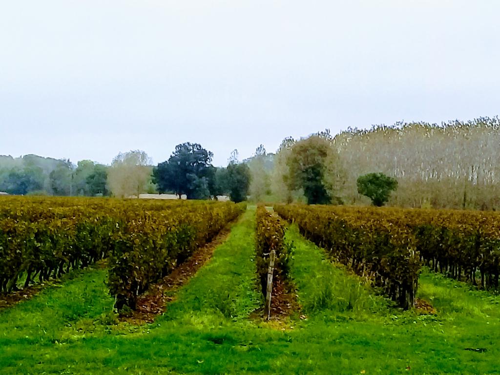 Propriete Viticole au bord de la Dordogne