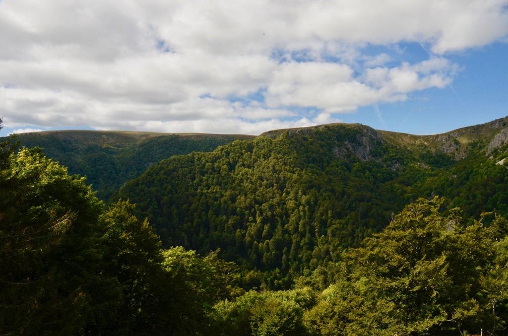Forêt vosgienne de 22 hectares