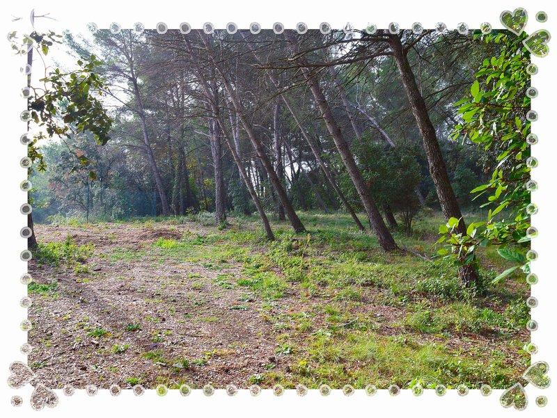 Terrain à bâtir 600m2 colline au centre du village